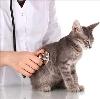 Ветеринарные клиники в Сосногорске